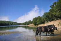 Nebrodi wild horses, Sicily Excursion