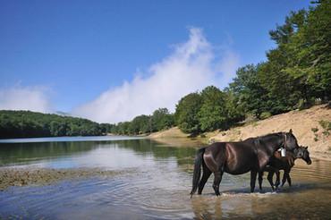 Cavalli selvatici, Nebrodi Trekking