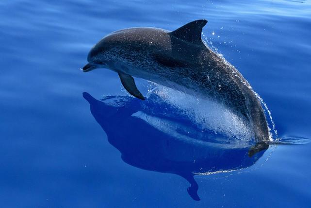 Tour in barca Sicilia con i Delfini