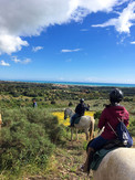 Sicily Horse Tour in Agrigento