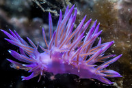 Marine plant, Best Scuba Diving in Sicily
