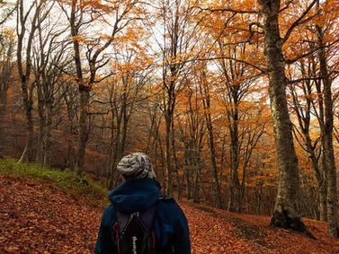 Foliage Bosco di Malabotta, Escursioni in Sicilia