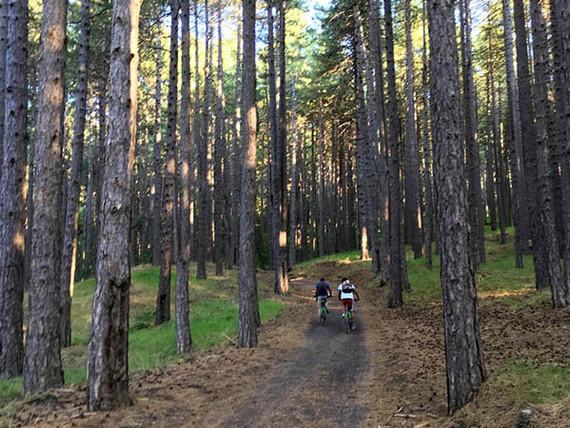 Etna Bike Tours, Pine woods