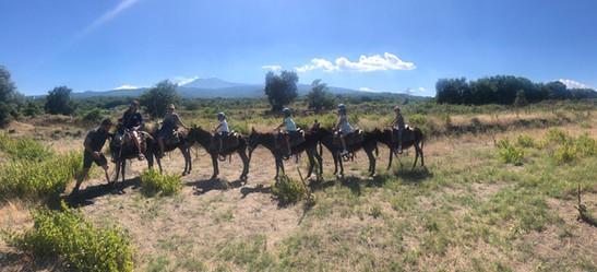 Etna View, Etna Donkey Trekking