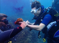 Finding strange animal, Diving in Sicily