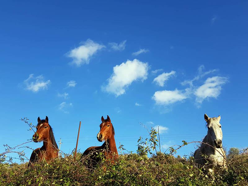 Escursioni a Cavallo Siracusa