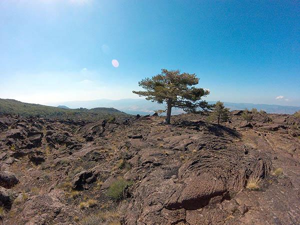 Etna Excursion, Lava field