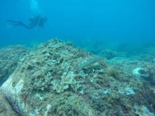 Exploring, Scuba Diving Catania