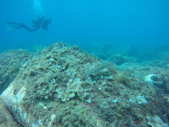 Fondale marino, Immersioni in Sicilia