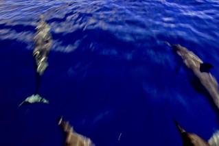 Tour in Barca Catania avvistamento Delfini