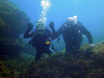 Divers among marine vegetations