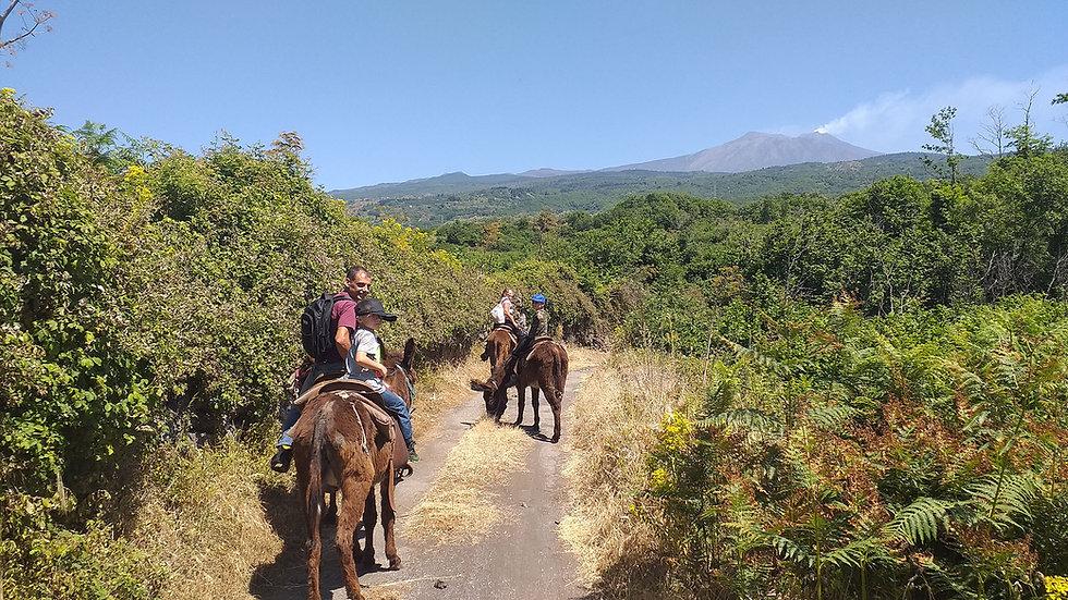 Etna Donkey, Excursion for Families on Mount Etna