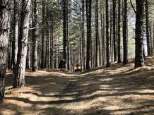 Off-Road, Escursione Etna Quad