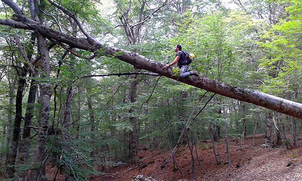 Etna Hike, A fallen tree