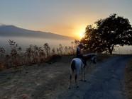 Sicily Horse Riding