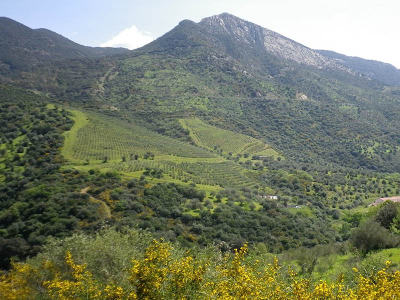 View, Sicily Horse Tours Pollina
