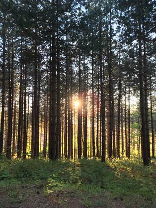 Woods, Etna Sunset Tour