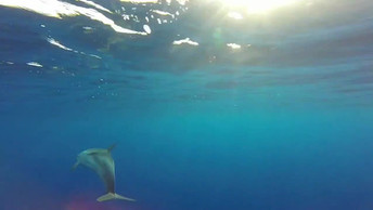 Sicily Dolphin Tour