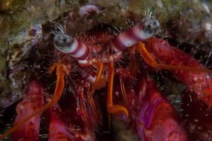 Biologia marina, Diving Sicilia