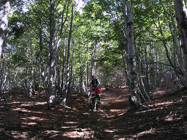 Electric Bike Hire, Forest