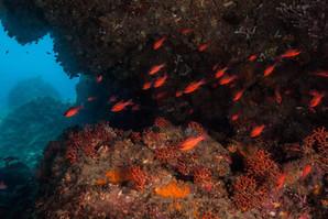 I colori del mare, Immersioni Giardini Naxos