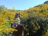 Escursioni a Cavallo Madonie