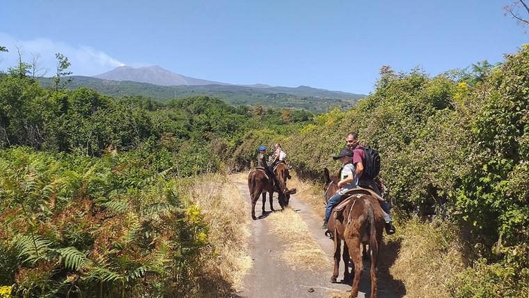 Etna, lungo il percorso dell'Etna Donkey Trekking