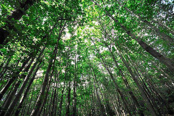 Etna Hike, Forest