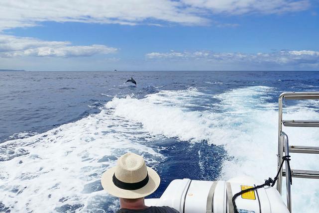 Tour in barca Sicilia, Avvistamento Cetacei Catania