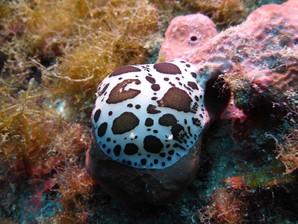 Vita sottomarina, Diving Acireale