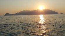 Delfini, Gita in barca Favignana