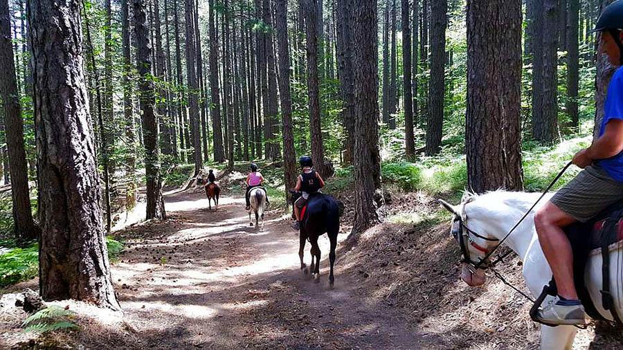 Escursioni a Cavallo Etna