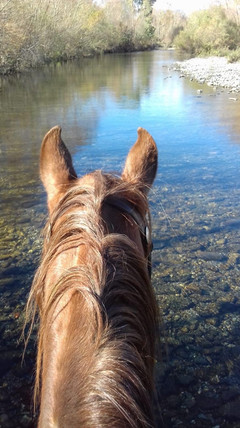 Into the water, Horse Experience