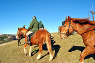 Nel Parco dei Nebrodi a Cavallo