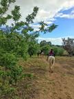 Escursioni a Cavallo Sicilia