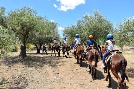 Bambini all'Attacco, Etna Donkey Trekking