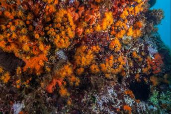 Marine flowers, Diving in Acitrezza