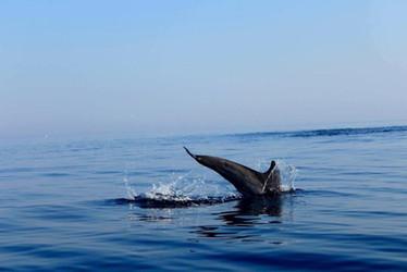 Giro in Barca Catania, Tour dei Delfini