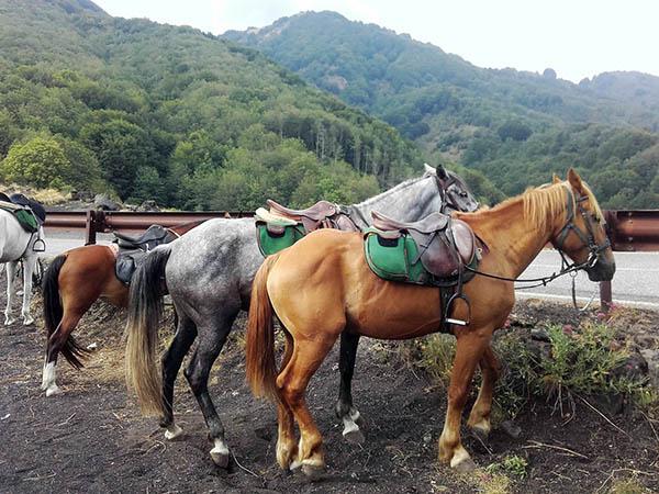 Horseback Riding Etna, Forest