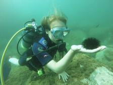 Marine Life, Sicily Diving
