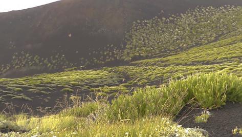 Mt Etna Tour, An huge lava field