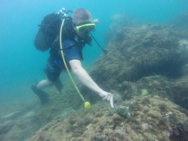 Diver discover marine life