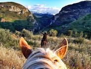 Palermo horse riding