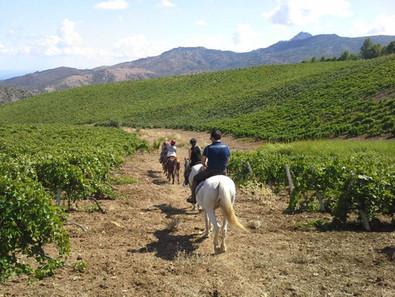 Passeggiata a Cavallo Cefalù