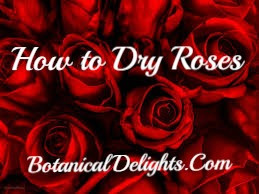 How to Dry Roses at Home