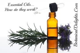 Essential oils how do they work?