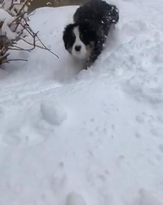 Fun in the snow.