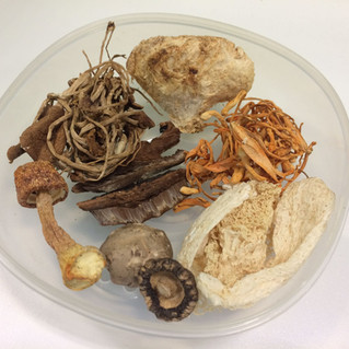 Mushrooms and lucid Ganoderma are natural antioxidants in our diet? 在飲食中不同的菇和靈芝是天然抗氧化的寶物?!