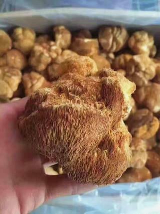 Benefits of mushrooms & how to rinse monkey head mushroom 菌類的好處&猴頭菇沖洗方法