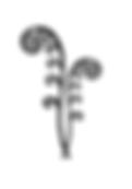 15162813082136484730fiddlehead-fern-clip